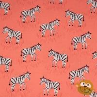 Mini Zebras In Coral